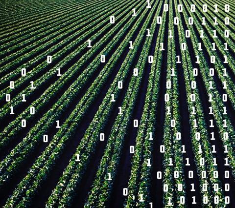 Building an online farm management application